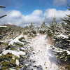 Bluestone Nursery, a cut-your-own Christmas tree farm in Camp Creek. (Jenny Harnish/The Register-Herald)