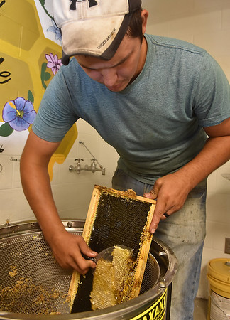 (Brad Davis/The Register-Herald) Beekeeper Sean Phelps scrapes wax from the extracted trays into a wax spinner which will separate the wax and leftover honey.