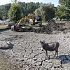 Donkey stands in the dried up pond on Old Mill Farm off of Old Mill Road in Beckley. Tim Martin, owner, says he's never seen it this bad and it's created some problems watering and feeding his livestock. <br /> (Rick Barbero/The Register-Herald)
