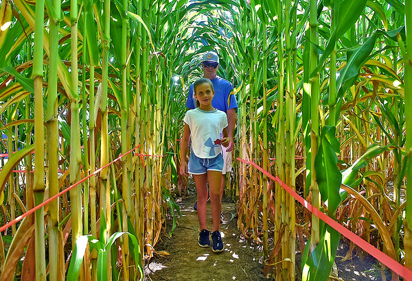 (Brad Davis/The Register-Herald) Seven-year-old Karrington Knowlton leads the way as she and dad Bucky navigate a giant corn maze, part of the State Fair's Agriculture Pavilion Sunday afternoon in Fairlea.