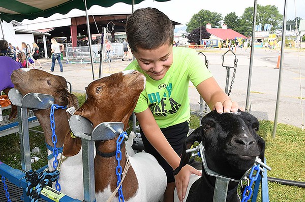 Arlee Burdette, of Ronceverte, grooms boer meat goats for showing during the State Fair in Fairlea Friday afternoon.<br /> (Rick Barbero/The Register-Herald)