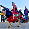 (Brad Davis/The Register-Herald) Sweater-clad pups draw lots of smiles as they're led along on leashes by members of Goodladd Professional Canine Services during Lewisburg's annual Shanghai Parade Wednesday afternoon.