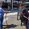 (Brad Davis/The Register-Herald) Kelly Ervine gives Ben, a commercial angus cow, a refreshing bath Sunday afternoon at the State Fair in Fairlea.