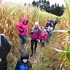 Crescent Elementary School children, teachers and parents, walking through the corn field maze at the Okes Family Farm in Cool Ridge.<br /> (Rick Barbero/The Register-Herald)