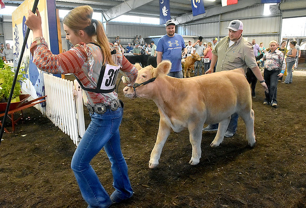 (Brad Davis/The Register-Herald) Cheyenne Currey, left, leads a young steer into the livestock arena where a calf show and contest was taking place Sunday afternoon at the State Fair in Fairlea.