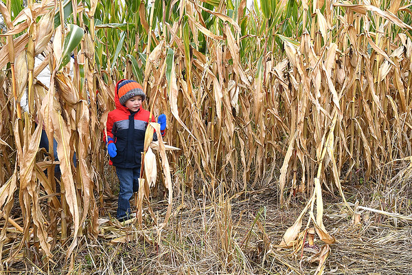 Mason Crigger, pre-school student at Crescent Elementary School, walking through the corn field maze at the Okes Family Farm in Cool Ridge.<br /> (Rick Barbero/The Register-Herald)