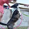 (Brad Davis/The Register-Herald) Marissa Kincaid feeds treats to her dog Courage during the Dazling Dog Show Sunday.
