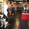 Jax, german shepherd, joins in with other members at Redline Fitness in Beckley. Redline was closed down due to COVID-19 and reopened on Monday, May 18.<br /> (Rick Barbero/The Register-Herald)