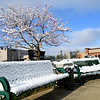 About an Inch of snow dropped in Raleigh County Wednesday morning covering the spring blooms, trees and benches at Word Park on Neville Street in Beckley.<br /> (Rick Barbero/The Register-Herald)