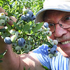 Sib Smith, of Huntington, picks blueberries at White Oak Farm in Renick.<br /> (Rick Barbero/The Register-Herald)