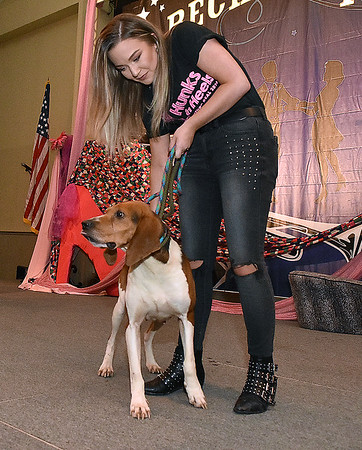 """(Brad Davis/The Register-Herald) Adoptable pooches take their turn walking the stage during the Hunks in Heels """"Fur"""" Real fundraising event Friday night at the Beckley Moose Lodge."""