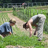 Kate Kistler, left and Sara Daugherty cleaning weeds from around onions planted at New Roots Community Farm on 167 Wolf Creek Road in Fayetteville. The farm harvest every Monday for Turnow and Thursday's for community sales. The farm in hosting an open farm market every Thursday from 1-6 p.m. until October.<br /> (Rick Barbero/The Register-Herald)