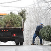 Beckley Board of Public Works employees Johnny Bragg, left and Donnie Allen, load up a Christmas tree on Teel Road in Beckley Monday morning. City of Beckley over the next couple days will have two crews traveling over 500 streets picking up trees free for residence in the City that will be dumped in the Raleigh County Solid Waste Authority landfield.<br /> (Rick Barbero/The Register-Herald)