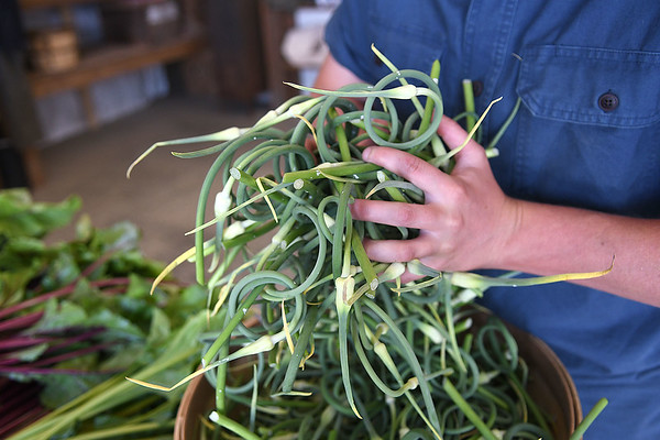 Skye Dexter, community food system coordinator, grabs a large handful of garlic capes for Nicole Svajlenka, of Hico at New Roots Community Farm on 167 Wolf Creek Road in Fayetteville. The Farm host an open farm market every Thursday from 1-6 p.m.<br /> (Rick Barbero/The Register-Herald)