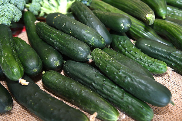 Cucumbers grown at New Roots Community Farm on 167 Wolf Creek Road in Fayetteville.<br /> (Rick Barbero/The Register-Herald)