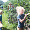 Max Tuckwiller, 7, his brother Elliot Tuckwiller, 4, and his mother Anna Tuckwiller pick blueberries at White Oak Farm in Renick Monday. Although late in the season the pick-your-own farm still has plenty of blueberries to pick and they are open this week Mon, Tue, Thur, Fri 8 - noon and 4 - 8 pm and Saturday 8 am - 5 pm. Depending on weather and picking conditions this week might close out their picking season.  Jenny Harnish/The Register-Herald<br /> <br /> 