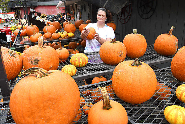 Susan Bennett, of Hinton, checks out some pumpkins to decorate for Halloween at The Haney Badgers Country Store in Glen Morgan off of Ritter Drive.<br /> (Rick Barbero/The Register-Herald)