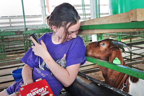 Reagan Helmick, 12, of Ronceverte, takes a break from loading the family's goats at the State Fair of West Virginia in Fairlea Wednesday. Jenny Harnish/The Register-Herald