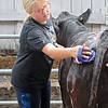 Samantha Rexroad, 13, a 4-H member from Braxton County, washes her Limousin cattle at the State Fair of West Virginia Wednesday in Fairlea.  Jenny Harnish/The Register-Herald