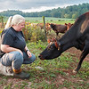 Perk Organic Dairy Farm manager Lauren Perkins is the fourth generation and first female to manage her family's organic dairy farm in Frankford.  Jenny Harnish/The Register-Herald