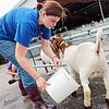 Emma Helmick, 15, of Ronceverte, washes her goat at the State Fair of West Virginia in Fairlea Wednesday. Jenny Harnish/The Register-Herald