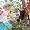 Aena McClinic, 3, feeds a cow at Perk Farm Organic Dairy in Frankford Saturday. The farm has started hosting weekend activities including cow petting, vendors, sunflower picking and other activities for children and adults. Jenny Harnish/The Register-Herald