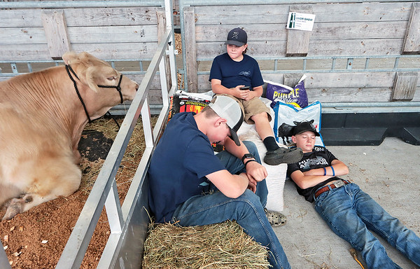 The Stone brothers, from left, Carson, 15, Kenley, 12 and Kaleb, 12, take a break after bringing their  steers to show at the State Fair of West Virginia in Fairlea Wednesday. The family left their home in Preston County at 4 a.m. to avoid long lines loading their animals. Jenny Harnish/The Register-Herald