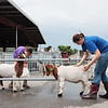 Sister's Kenley, 12, and Emma Helmick, 15, of Ronceverte, wash their goats at the State Fair of West Virginia in Fairlea Wednesday. Jenny Harnish/The Register-Herald