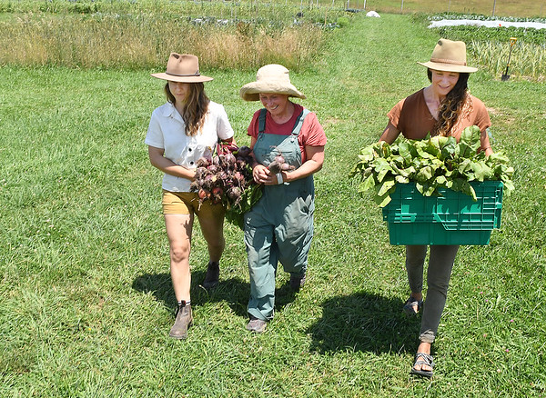 Susan Wheeler, farm directoe, left, Erin Yakin, production crew lead manager and Dina Hornbaker, sales manager, carry in a load of Beets thay harvested at New Roots Community Farm on 167 Wolf Creek Road in Fayetteville.<br /> (Rick Barbero/The Register-Herald)
