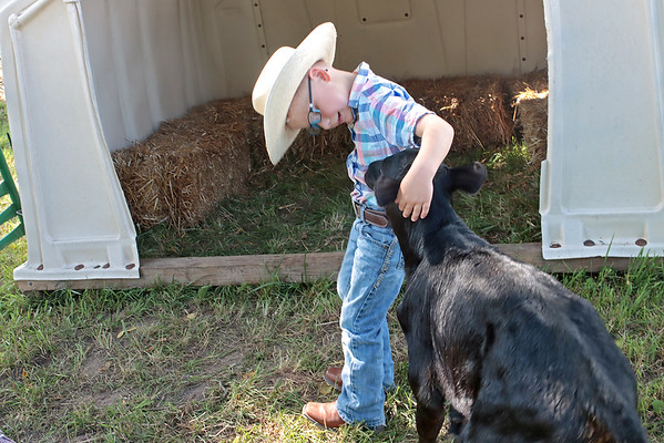 Zachery Hanna, 5, pets a cow at Perk Farm Organic Dairy in Frankford Saturday. The farm has started hosting weekend activities including cow petting, vendors, sunflower picking and other activities for children and adults. Jenny Harnish/The Register-Herald