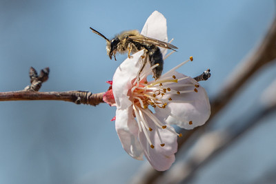 Blooms & insects