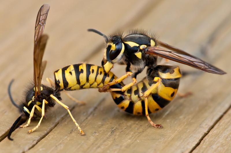 Makin' Wasps