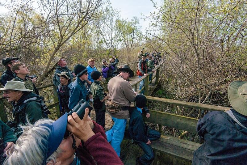 Birders on the boardwalk at Magee Marsh, NW Ohio