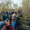 Birders on the boardwalk at Magee Marsh, NW Ohio