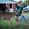 Little girl wranglin' her calf.