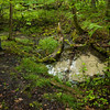 "At this spot in the woods, water ""boils"" out of the ground and starts a small tributary creek."