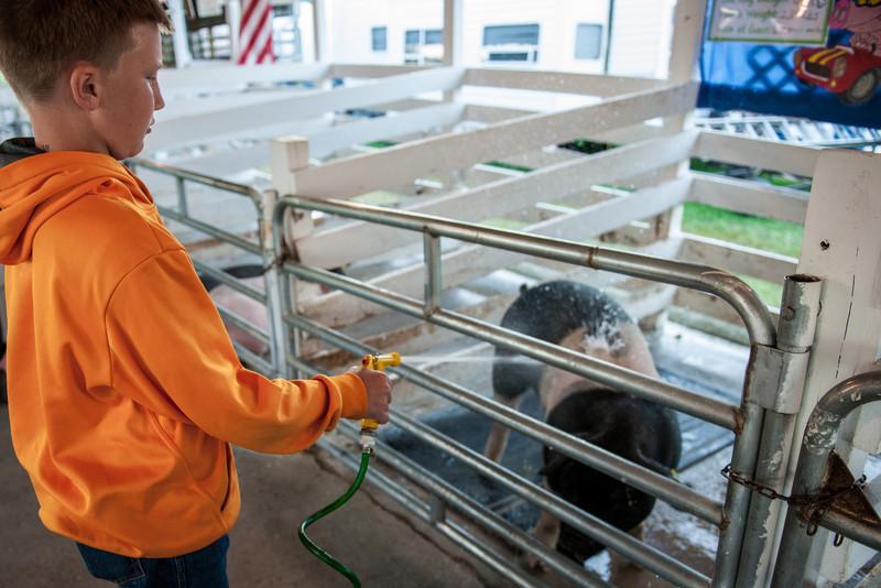 kid squirtin' a pig