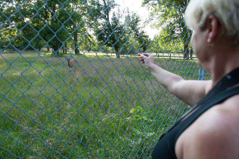 Pam feeding a deer.