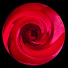 This is a closeup of a miniature rose, about the size of a quarter.  I stylized it a bit in Photoshop.