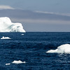 This berg, with its attendant  growlers, welcomed us to the Strait of Belle Isle and Labrador.