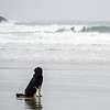 The beaches around Tofino are a magnet for surfers.  And we were both amazed by  the patience of this dog waiting for her human to stop playing silly games.