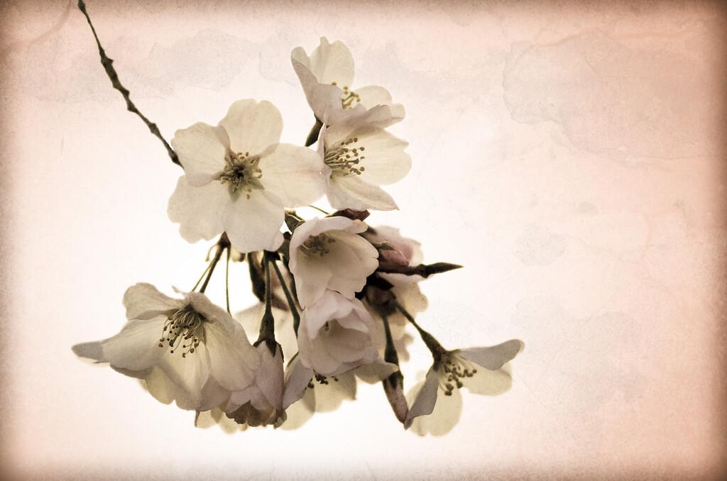 Vintage Bloom