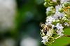 Gathtering Pollen