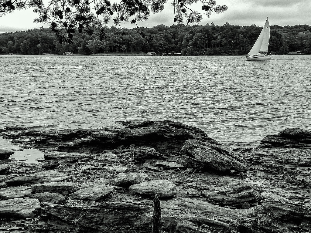 Lake Lanier Sailboat - B&W