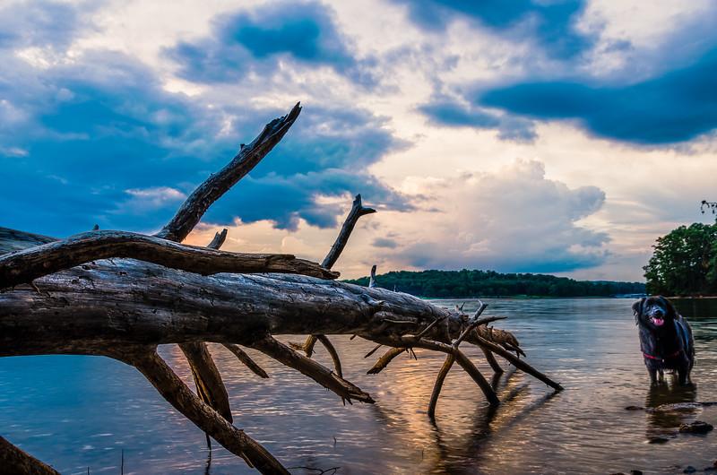 Hopkins in the Lake