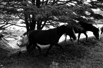 Whoa, black and white horses!