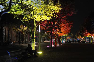Festival of lights in full bloom