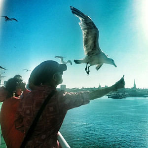 Leaving Tallinn, feeding seagulls