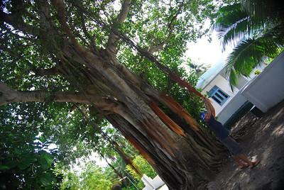 MALDIVES 356.jpg