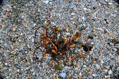 Sea-weed.